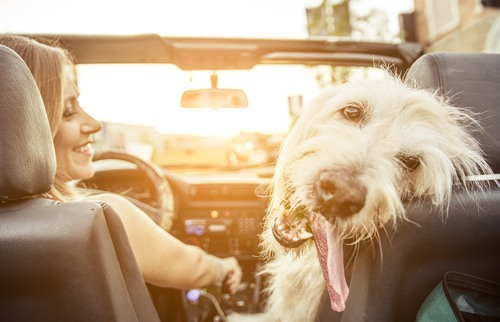 Using Pet Restrains to Avoid Distracted Driving